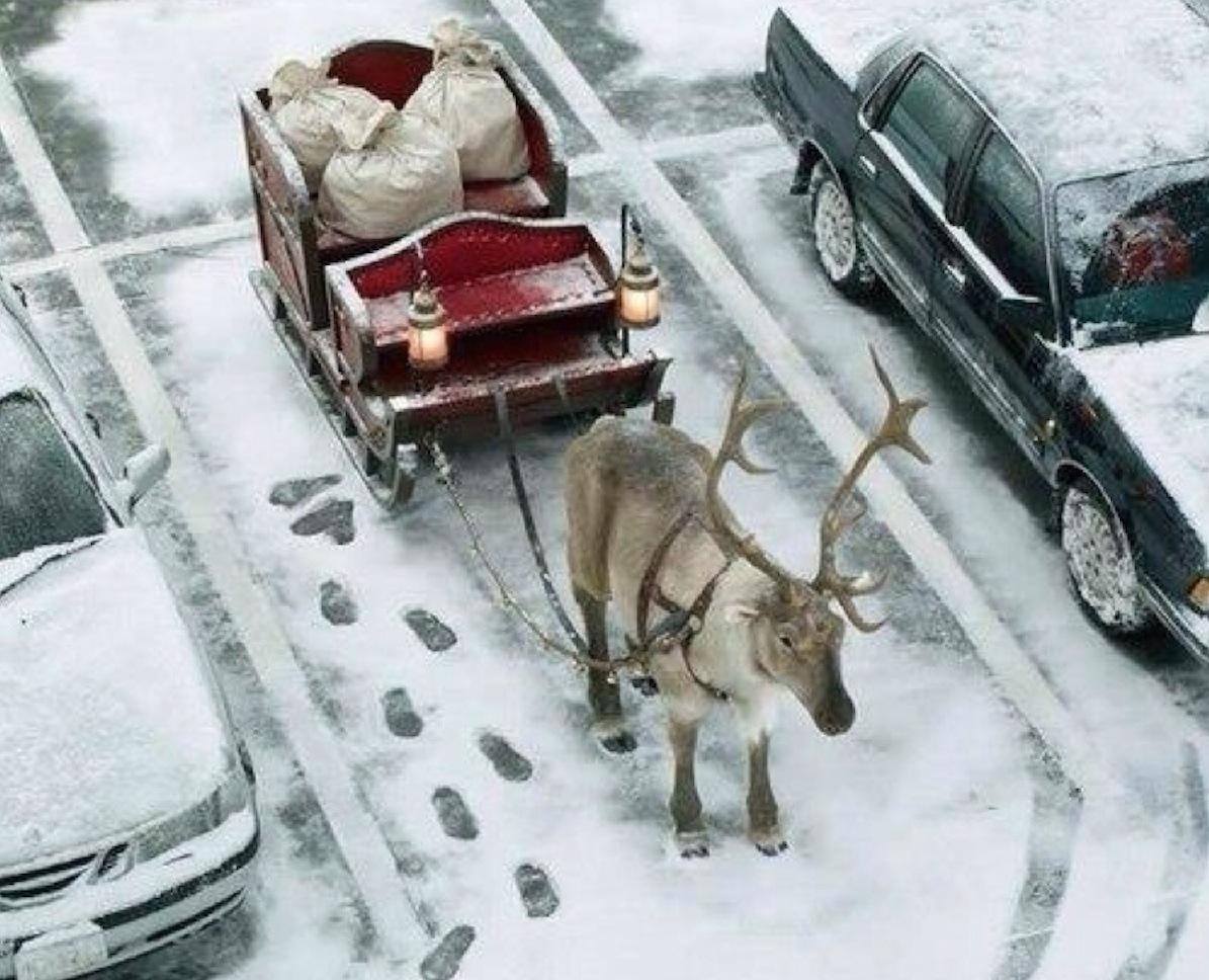 Reindeer sleigh in traffic
